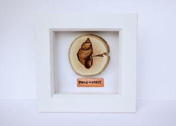 Wooden Framed Pond Life Creature - Pond Snail