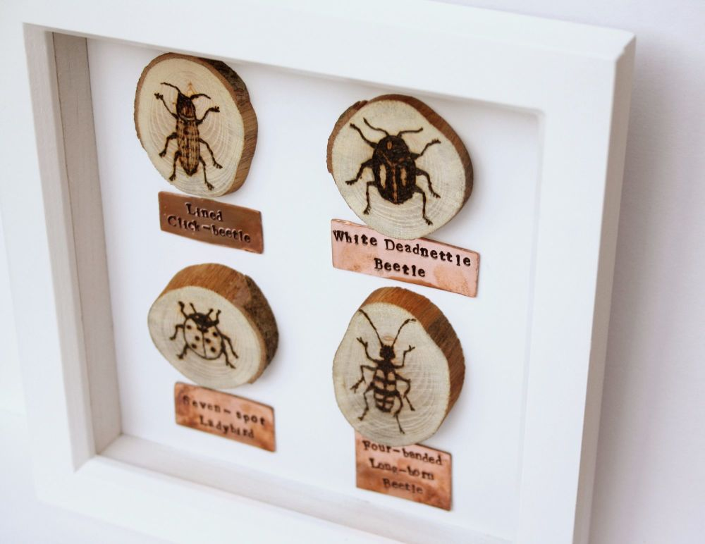Wooden Framed Four Insects - Beetle Group 1