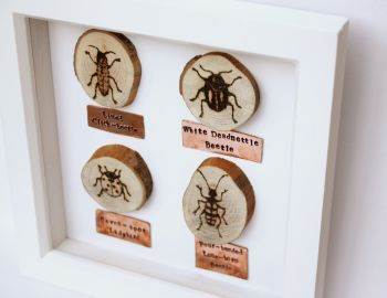 Wooden Framed Four Insects Wall Decor - Beetle Group 1