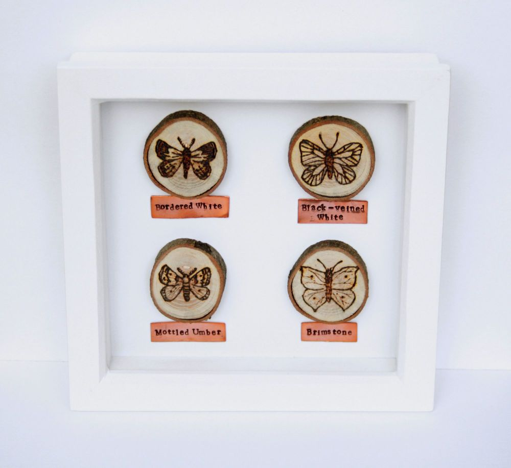 Wooden Framed Four Insects - Butterflies & Moths