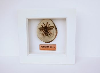 Wooden Framed Insect - Common Wasp
