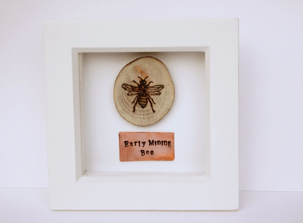 Wooden Framed Insect - Early Mining Bee