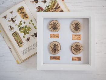 Wooden Framed Four Insects Wall Decor - British Bee Group