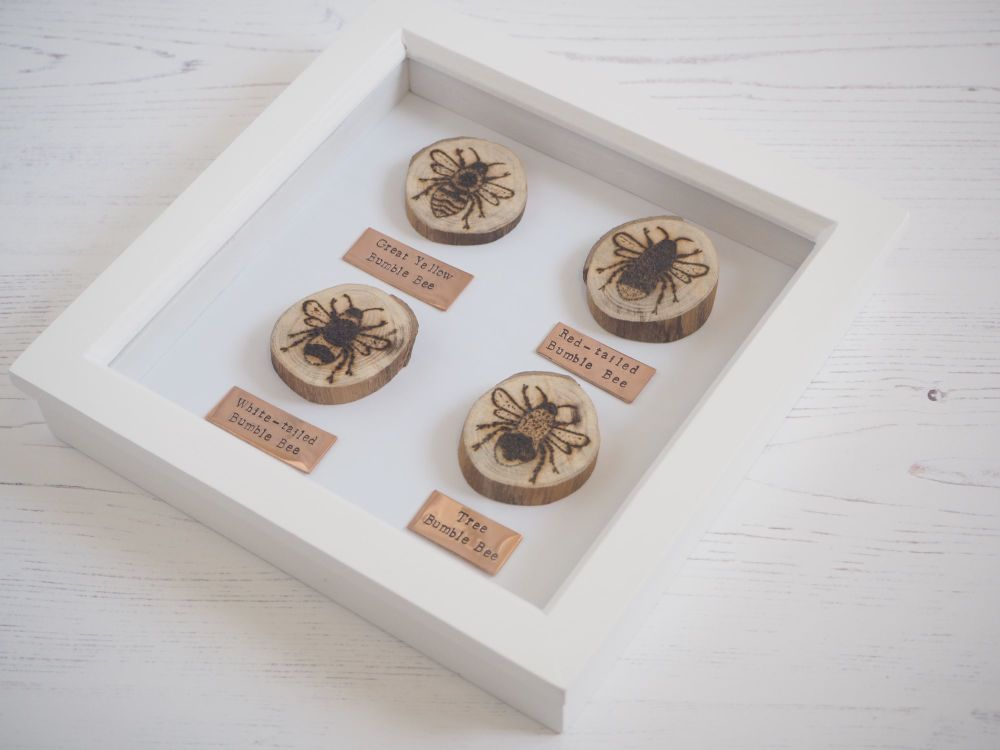 Wooden Framed Four Insects Wall Decor - British Bumble Bee Group