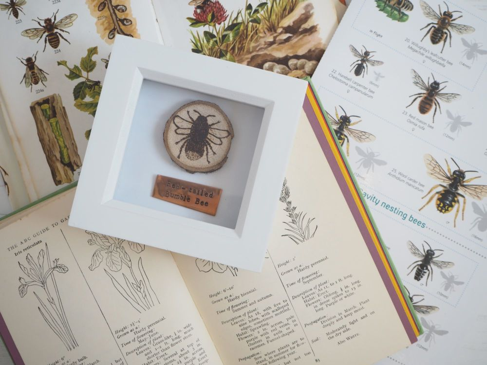 Wooden Framed Insect - Red-tailed Bumble Bee