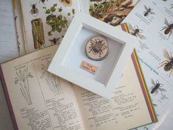 Wooden Framed Insect - Tree Bumble Bee