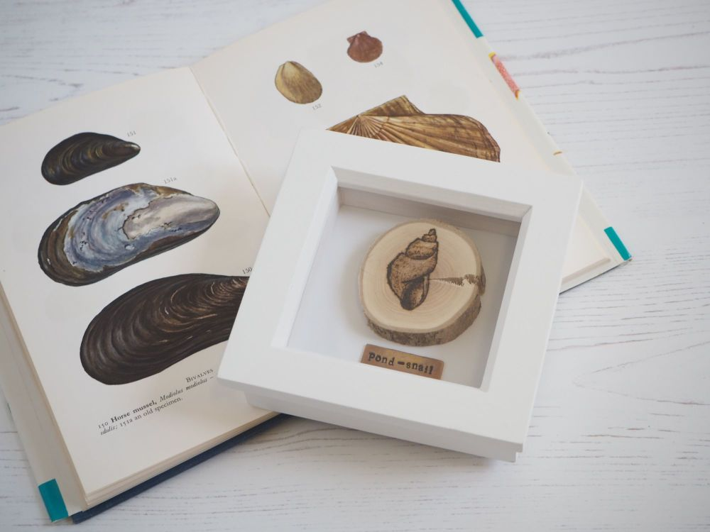 Wooden Framed Insect - Pond Snail