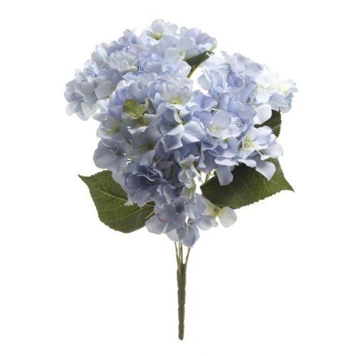 Blue Hydrangea Blue