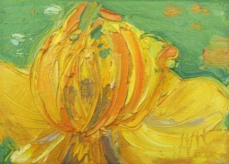 Trollius - Yellow Globeflower