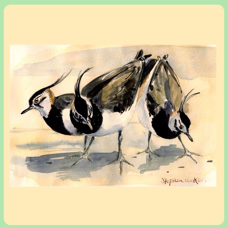 Lapwings
