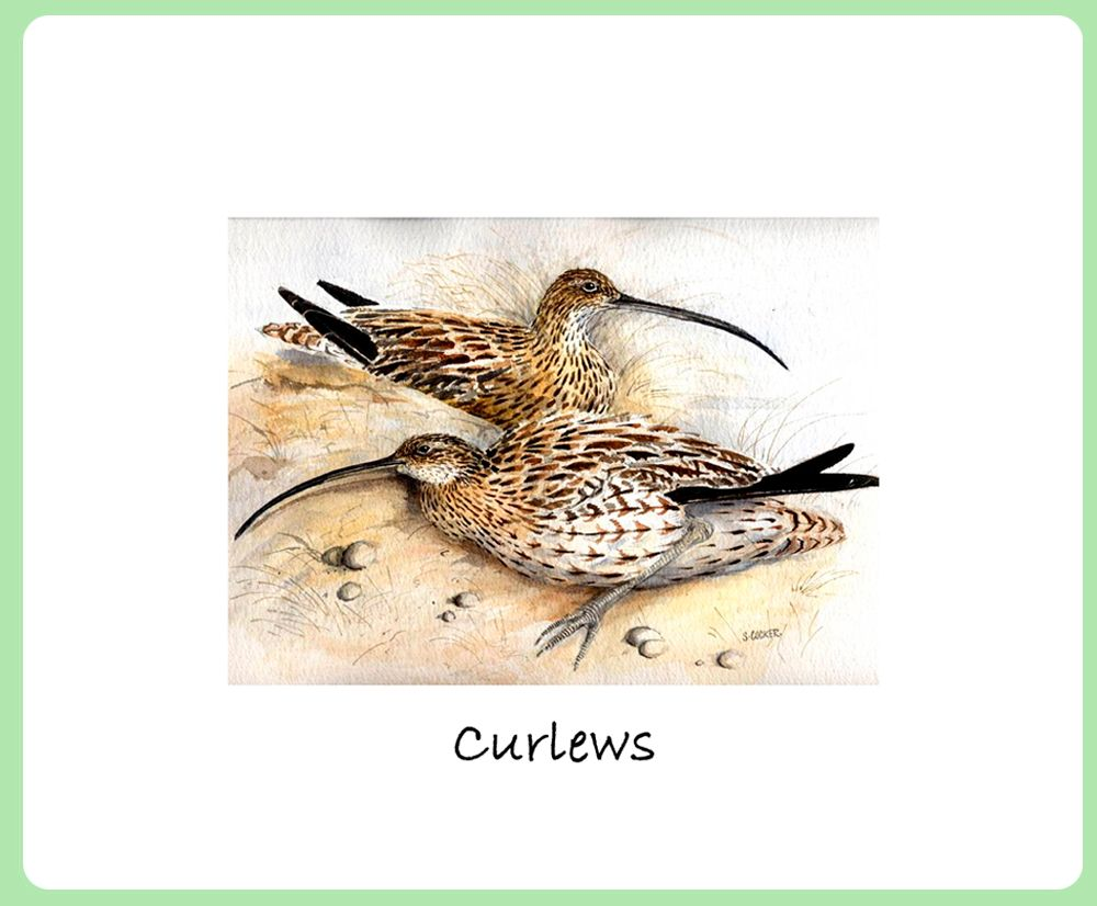 Curlews Placemat