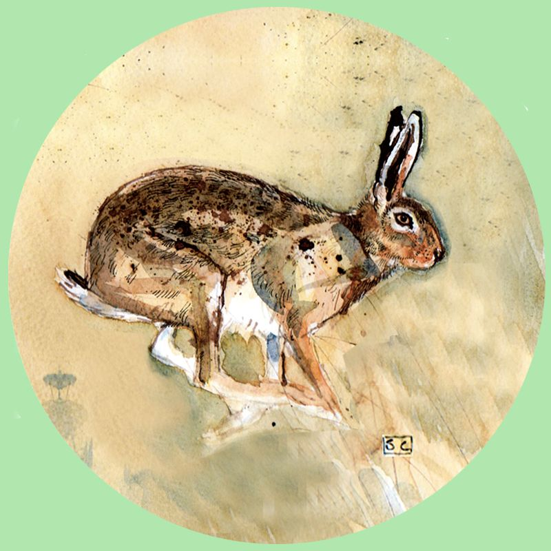 Hare New 3