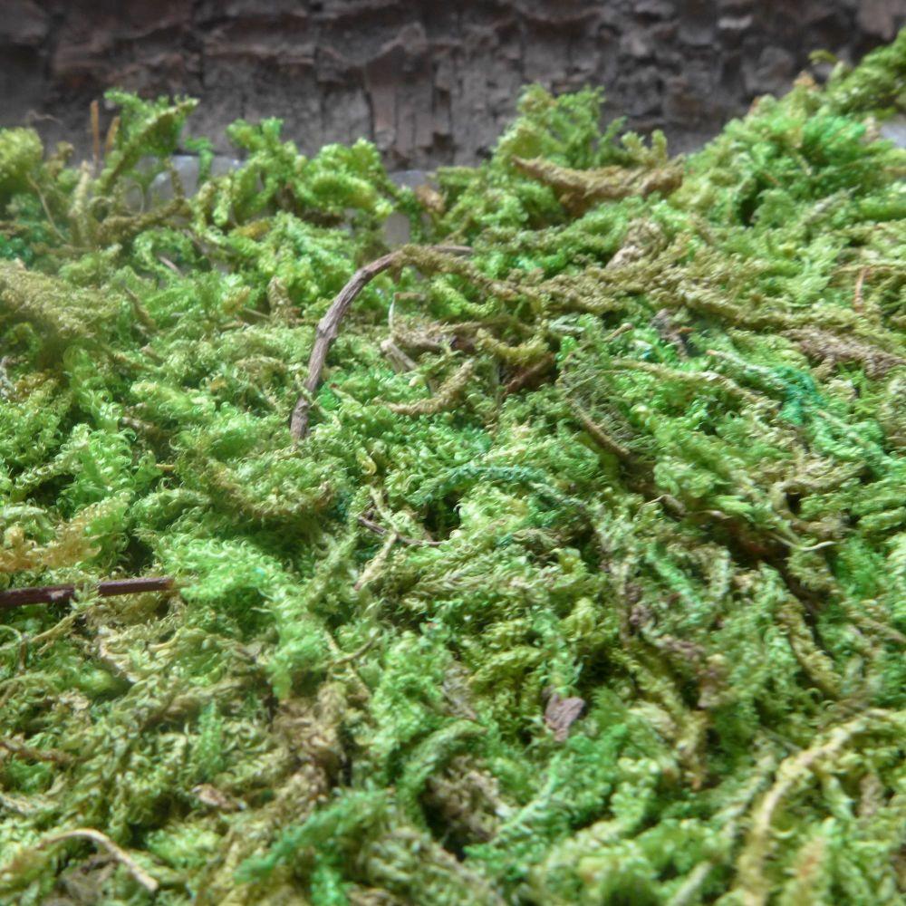 Faux Green Woodland Moss