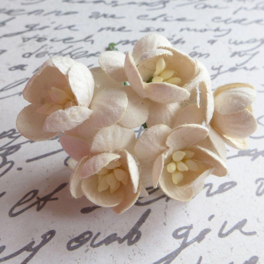 Cherry Blossom Mulberry Paper Flowers ~ Cream (PF052)