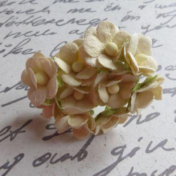 Mini Cherry Blossoms ~ Cream (PF030B)