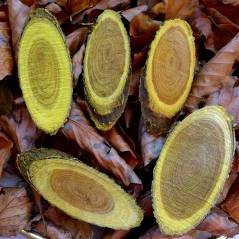 Yellow Real Wooden Slices