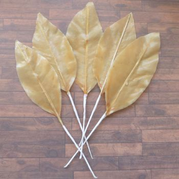 Set of 6 Waxy Skeleton Leaves - Assorted Sizes