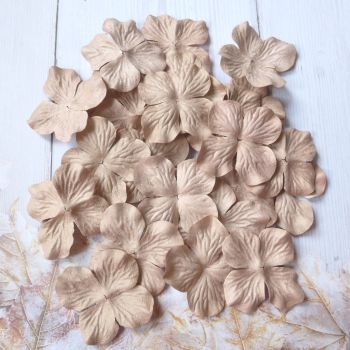 Large Mulberry Hydrangea's - Nude (PF036a)