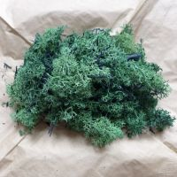 Natural Finland Moss  - Dark Green 40g