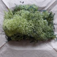 Natural Finland Moss - Olive Green 40g