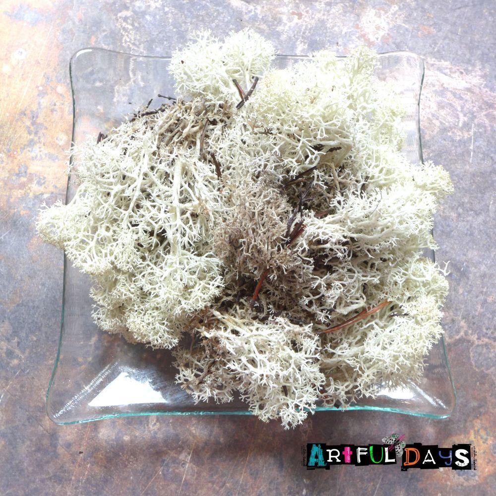 Natural Finland Moss  - Natural 40g