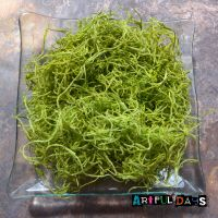 Apple Green Artificial Forest Moss 10g - Sea Critters Collection
