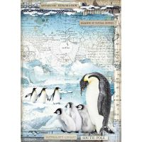 Stamperia Arctic Antarctic A4  Penguins Rice Paper (DFSA4479)