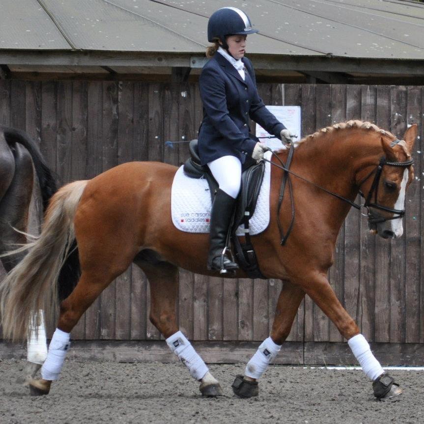 Dressage Horses at Bunny Hill