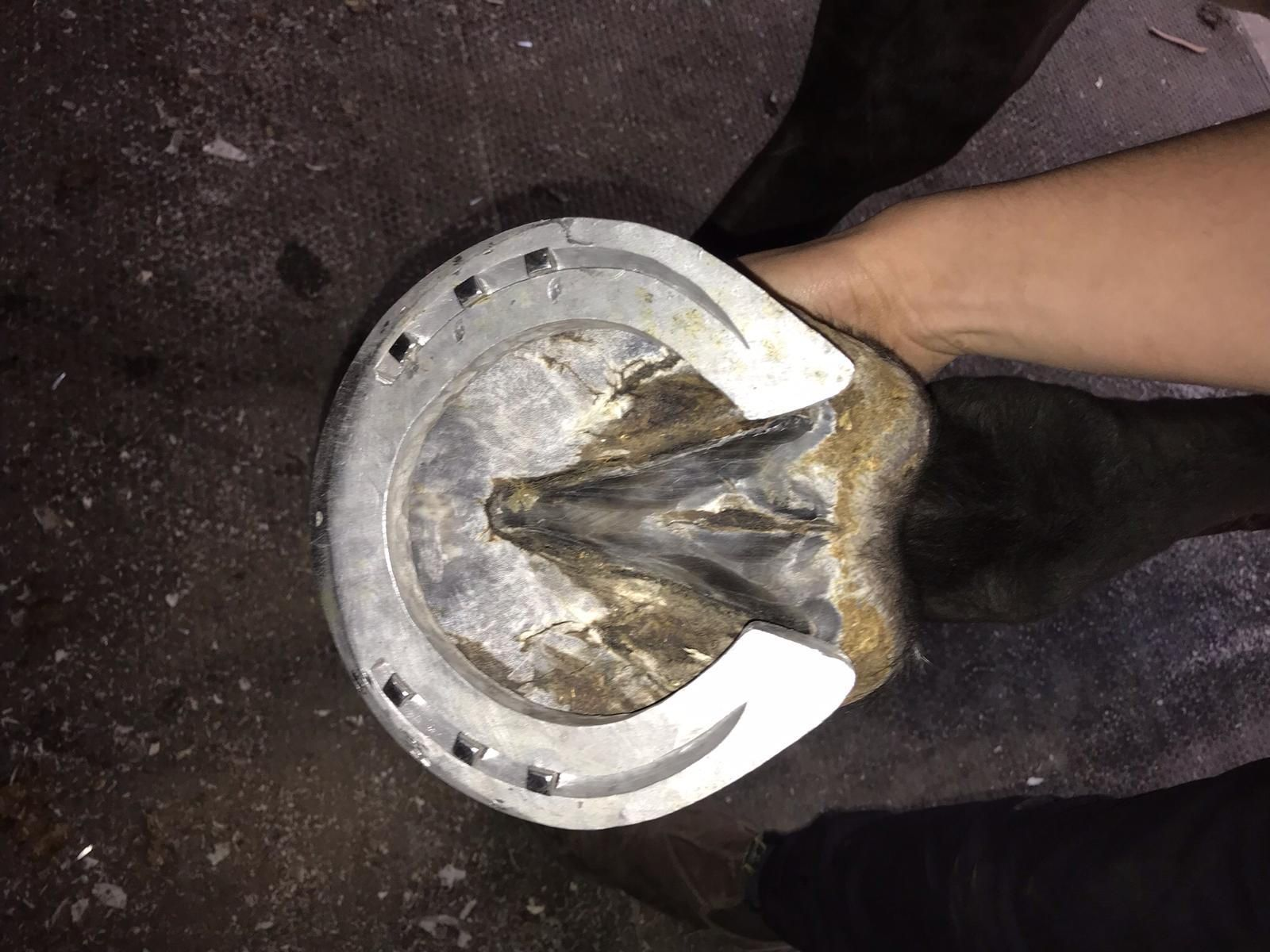 Aluminium Onion Shoe