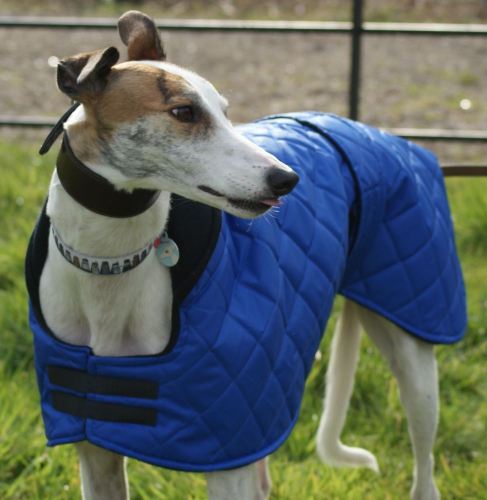 <!-- 001 -->Sighthound Coats