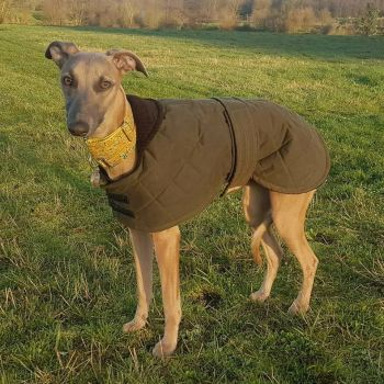 Antique Waxed Whippet Coat