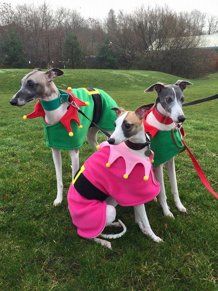 Whippet Christmas Coats