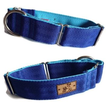 "1.5"" Double Webbing Royal Blue/ Turquoise Whippet Martingale"