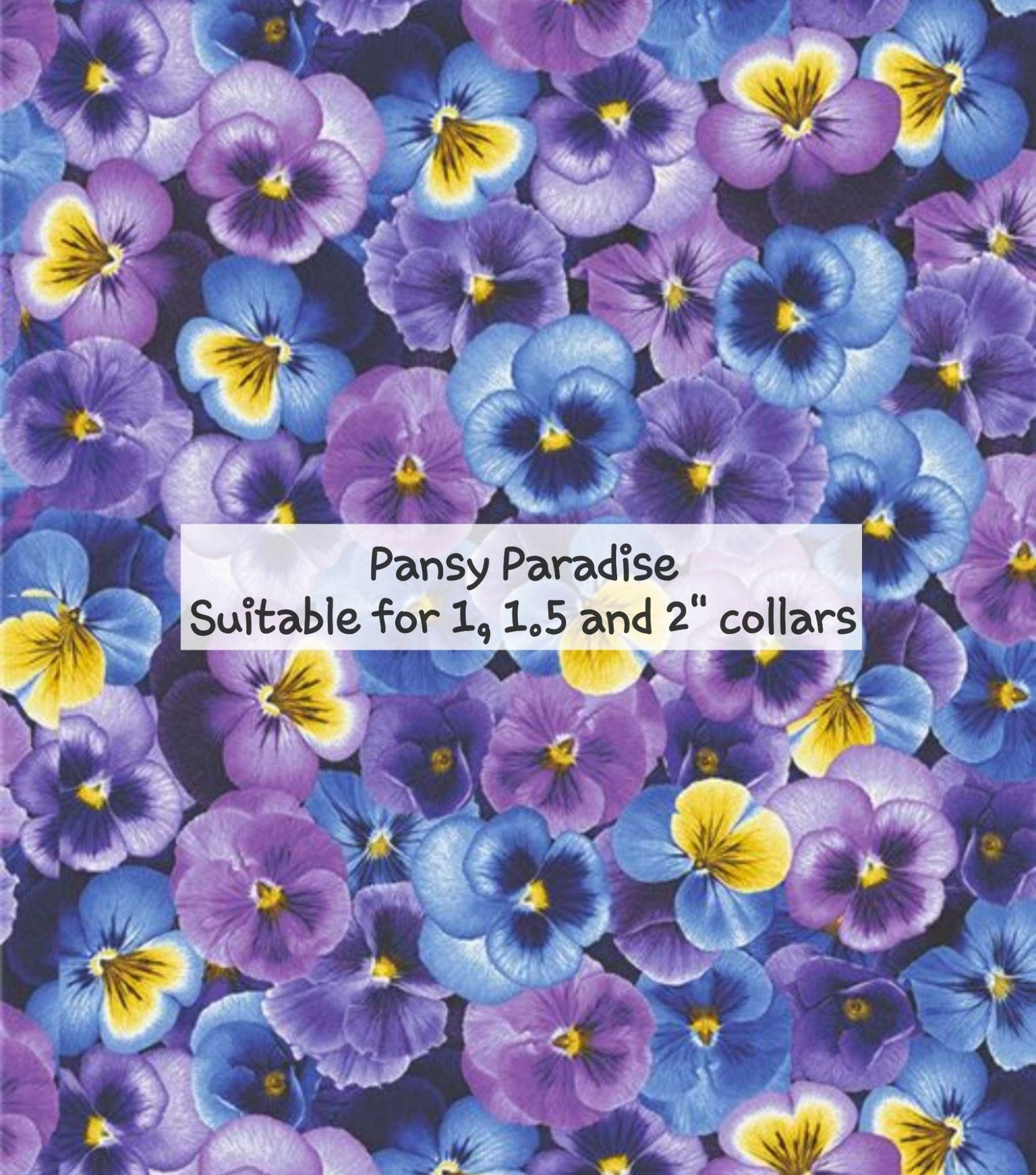 pansy paradise