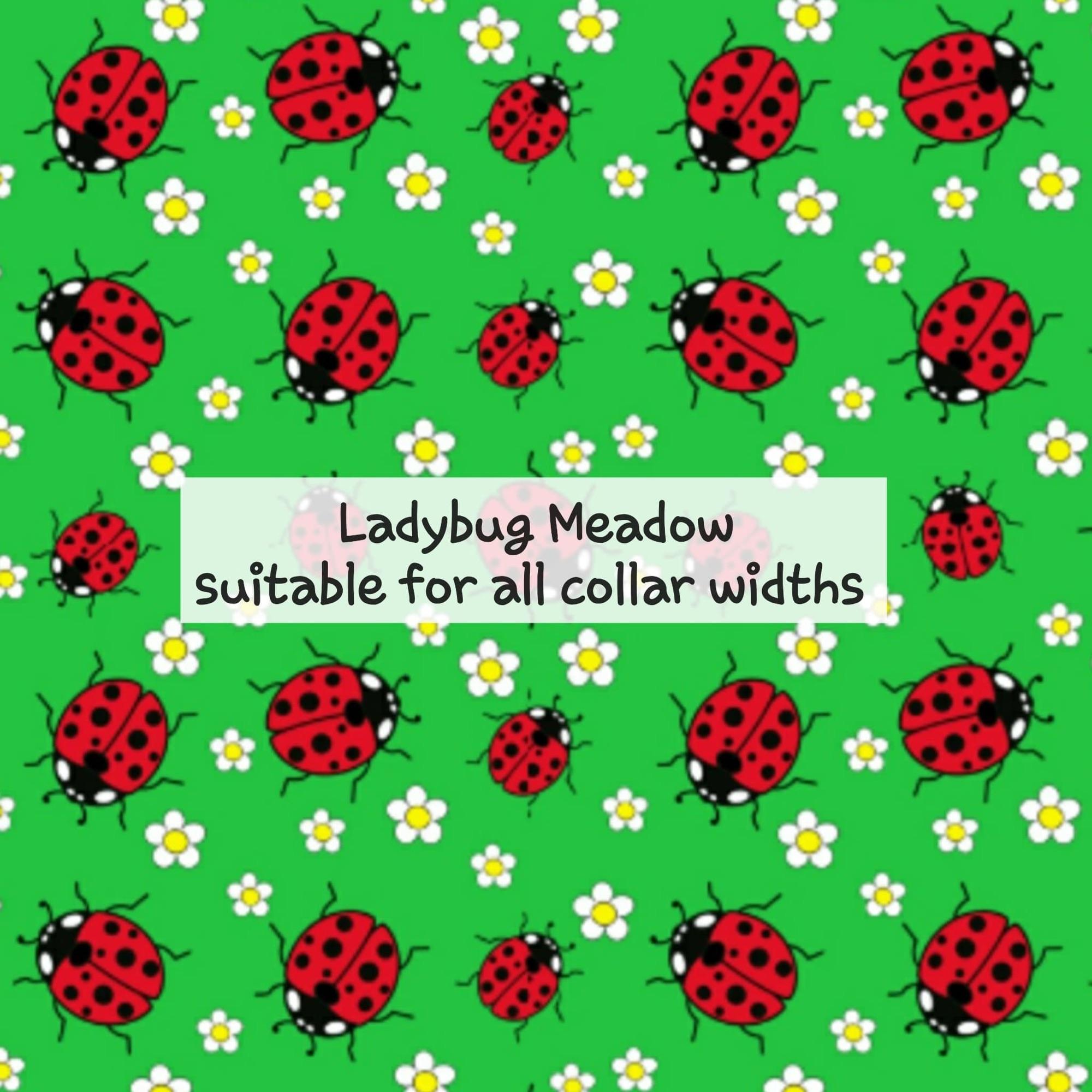 Ladybug Meadow