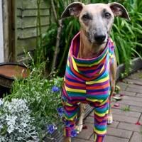 Rainbow Stripes T-shirt Tankies