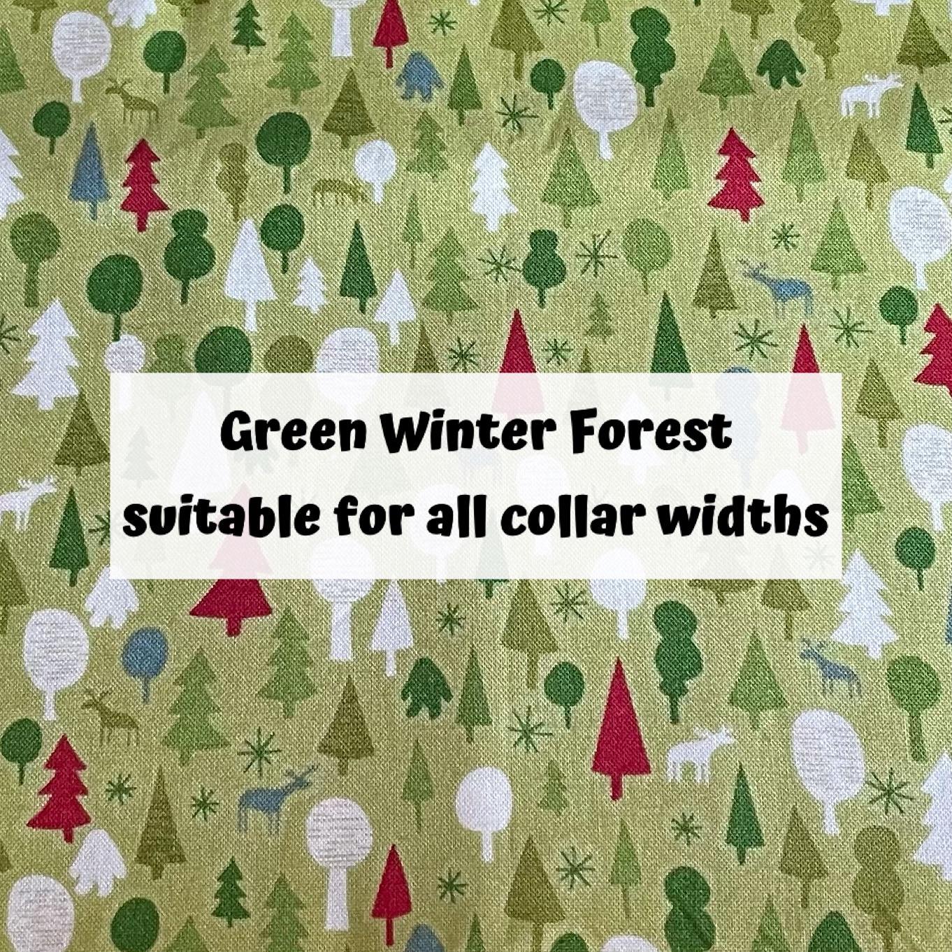 Green Winter Forest
