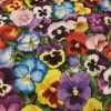 Pansies - Suitable for 1.5 and 2 inch collars