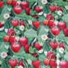 Strawberry Fields - Suitable for 1, 1,5 and 2 inch collars