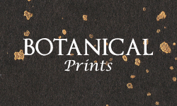 Botanical Prints
