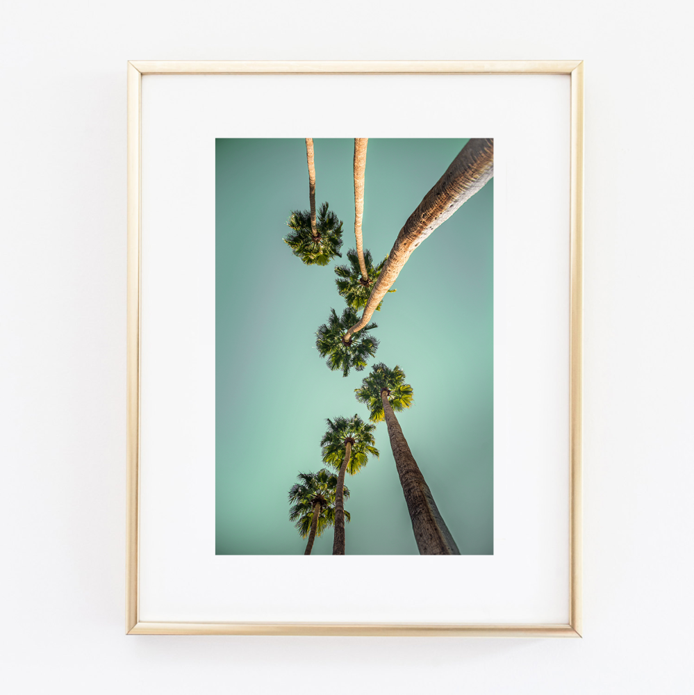 Coconut Tree Tops print