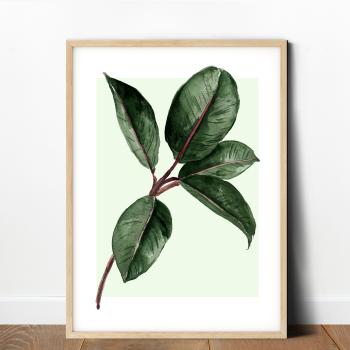 Rubber Plant Leaf Print