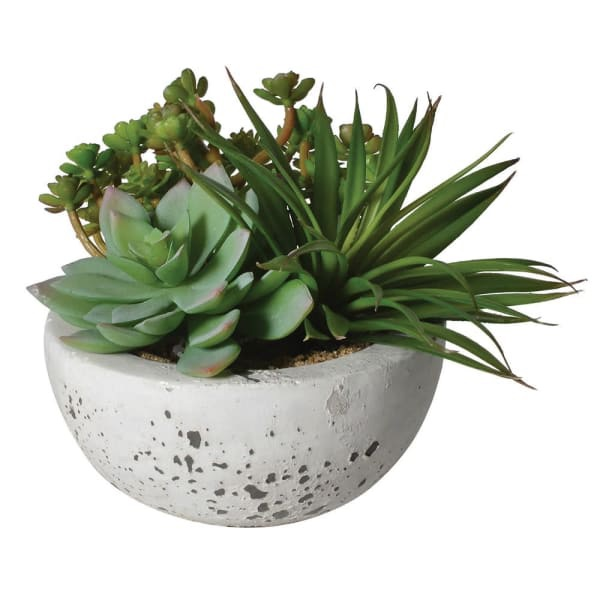Succulents in Grey Cement Bowl