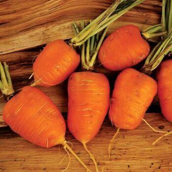 Carrot Oxheart