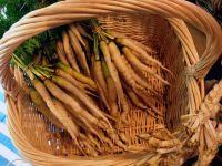 Carrot White Belgium