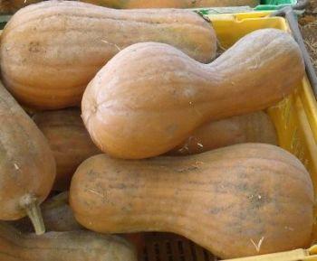 Pumpkin - Chucks Winter