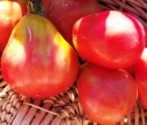 Tomato - Oxheart