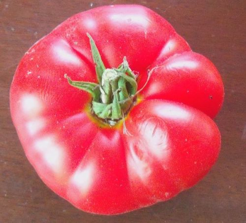 Tomato - Watermouth