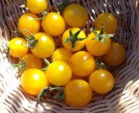Tomato Yellow Current Cherry