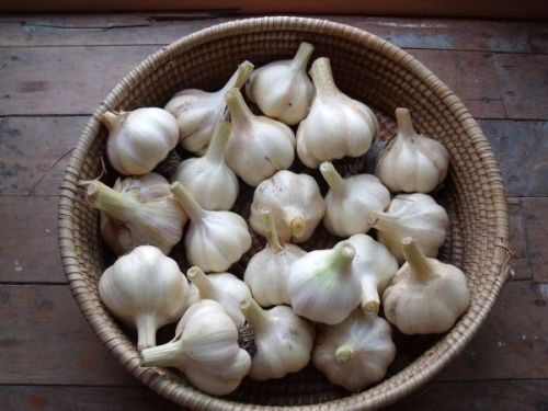 Garlic - Early Pearl 200g
